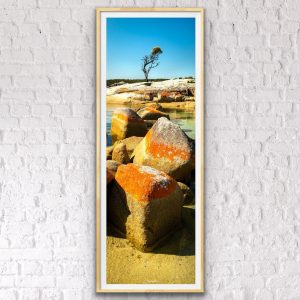 bay of fires tree landscape photography