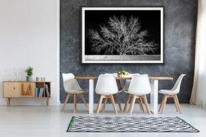 Maleny black and white landscape photography