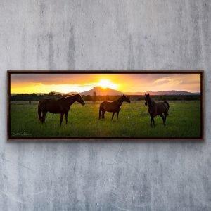 mount ninderry landscape photography