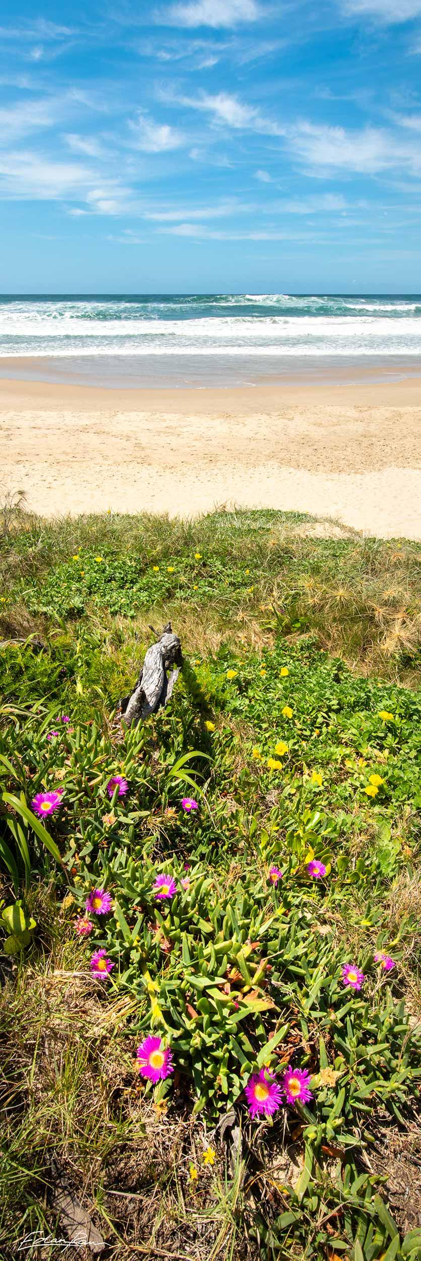 peregian beach landscape photo