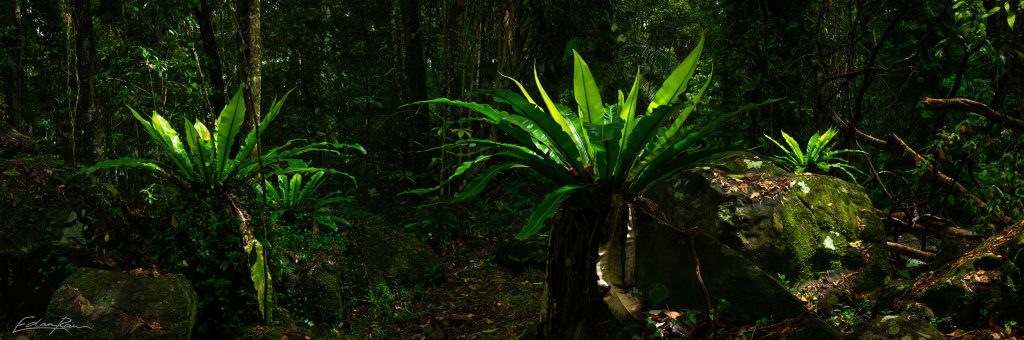 buderim forest landscape photography